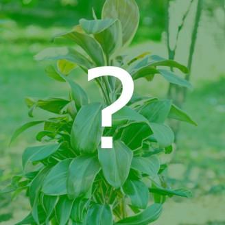 Plante suprise